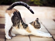 No need to slack! Stretch your writing creativity like a cat.