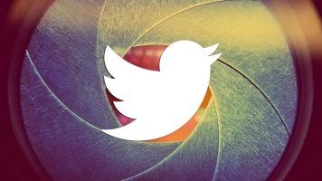Twitter bird camera celebrity