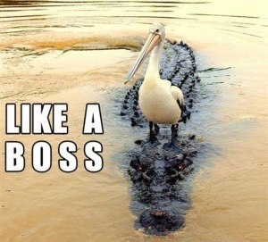 Like a Boss Meme Pelican vs Crocodile