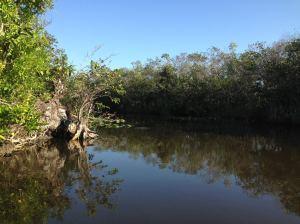 Everglades via KLWightman.com